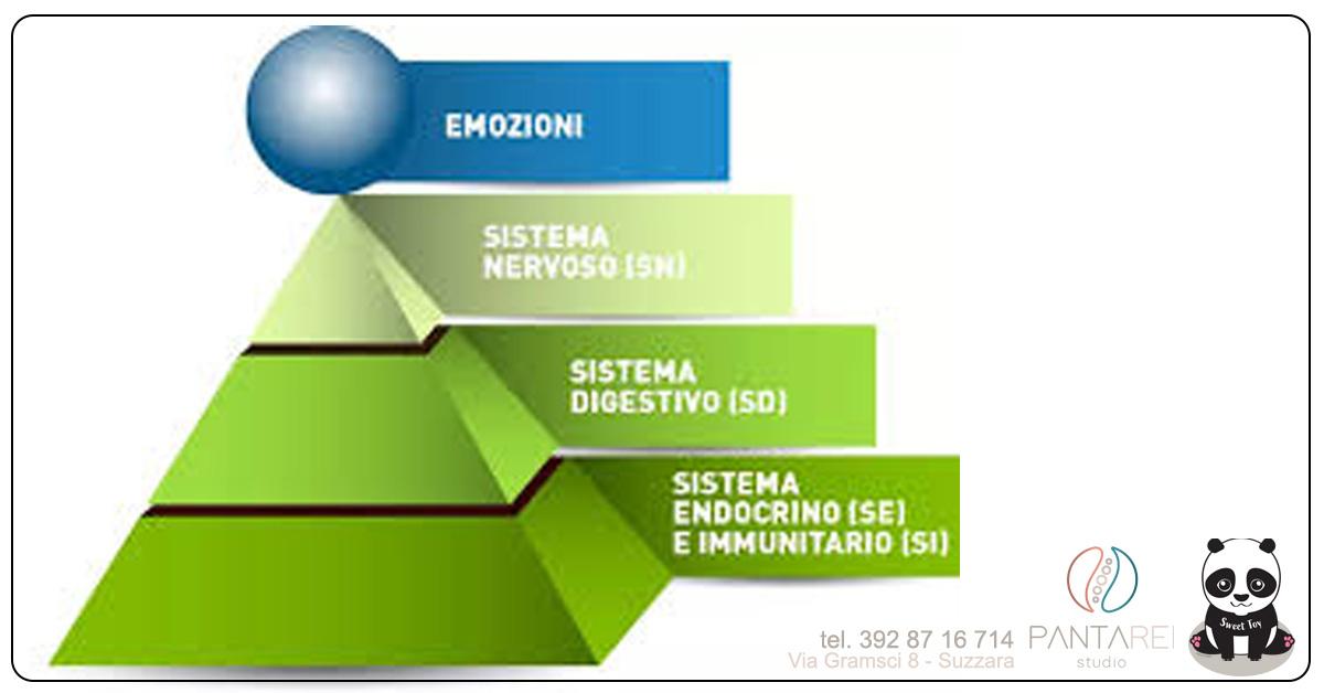 sistemaimmunitarioLara